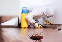 صورة شركة مكافحة حشرات